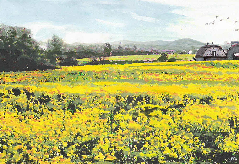 Spring Colors Yellow Mustard Fields Maryland Landscape. $450, 18 x 12 inches; $20 to $30, medium-size prints, free downloads. Original multimedia acrylic/oil painting, near Frederick Maryland. Multimedia classical traditional modern acrylic oil ‪‎painting‬s. ‬‎GrlFineArt ‪‎art ‪‎fineart ‪‎painting, room decor, ‪‎painting‬s, prints, landscapes, seascapes, boats, figures, nudes, figurative, flowers, stillife, digitalabstracts